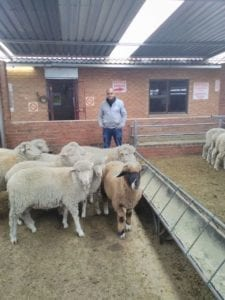 Imraan Ishmael, owner of Lenasia Livestock, with some of his livestock