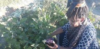 Nonkululeko Britton-Masekela, running the farm Kula, has an agricultural passion