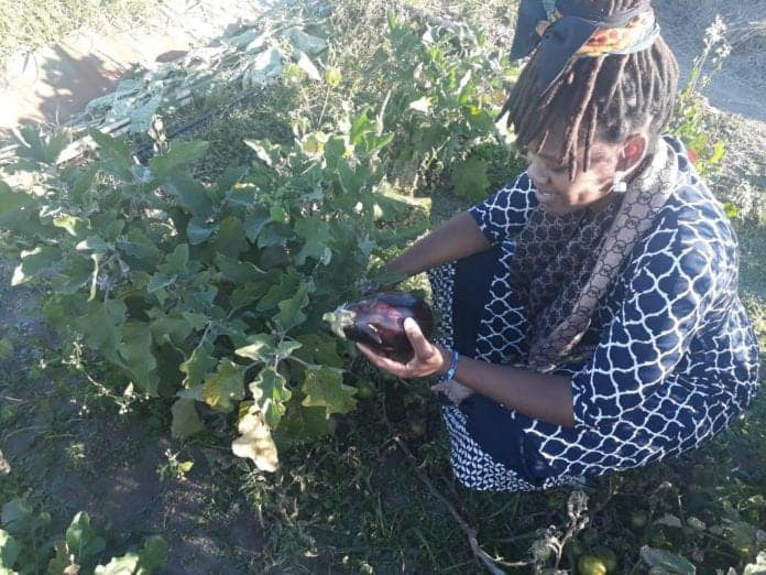 Nonkululeko Britton-Masekela, running the farm Kula, has an agricultural passion