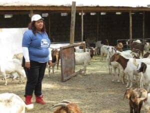Lerato surrounded by goats