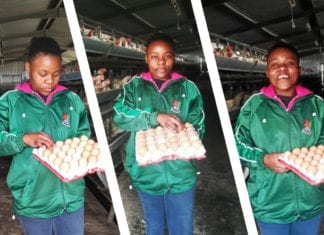 Young female farmer Mbalentle Sipingane, egg farmer of family business Manzoi Egg Farm.