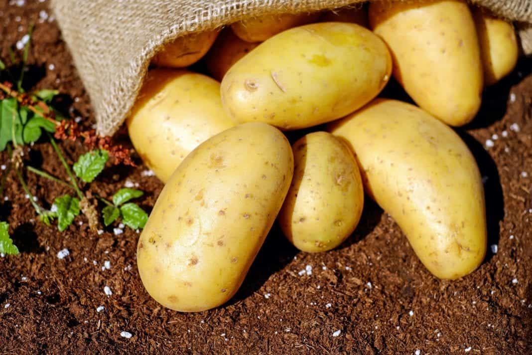 Not only are potatoes delicious and versatile but they are also good for your health.