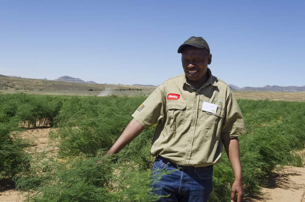 Asparagus Farmer Petrus Tsotetsi on his Morgenson farm near Rosendal in the Free State. Photo: Food For Mzansi