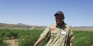 Asparagus Farmer Petrus Tsotetsi on his Morgenson farm near Rosendal in the Free State. Photo: Food For Mzansi