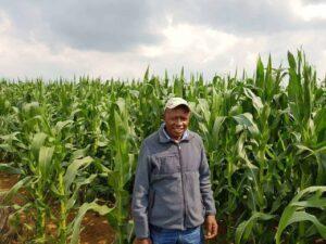Petrus Tsotetsi in mielie field.