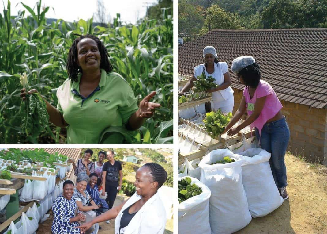 Nonhlanhla Joye, the founder and director of the Umgibe Farming Organics and Training Institute.