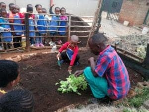 In less than a year Abaa managed to grow over a thousand trees in his first nursery.
