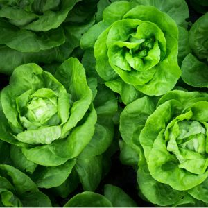 Studies show lettuce as beneficial in lowering cholesterol levels and reducing the risk of cancer.