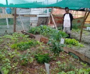 Buyiswa Mayekiso pictured in her home garden in Greenpark, Mfuleni.