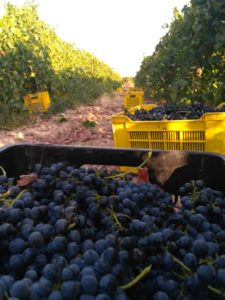 The severe drought has negatively impacted the wine industry since 2015.