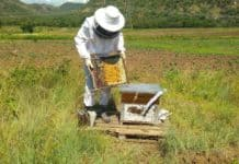 Themba Mntambo has utilised the potential of urban beekeeping into a profitable business, Nyoci Organics.