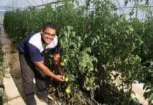 Byron Booysen, is a tomato farmer and a beneficiary of the commodity approach, says it is informative but a few thing can change within the program. Photo: Experience Matshediso (Casidra)