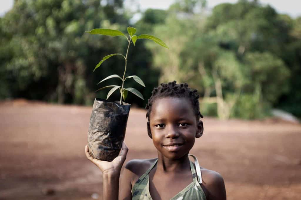 Greenpop has planted 111,903 indigenous and fruit trees to date. The non-profit organisation also has projects in Zambia, Malawi and Tanzania.