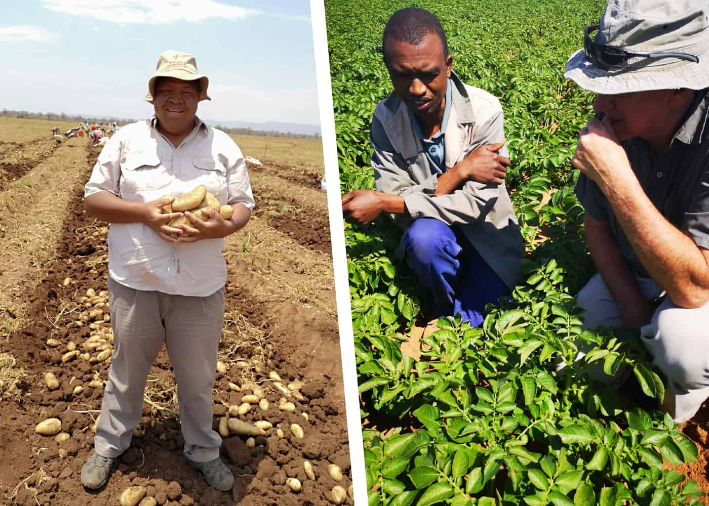 Over the years, Potatoes SA's enterprise development program has helped several emerging potato farmers in building a commercial farming business.