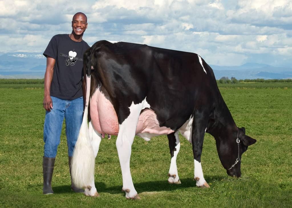 Future Farmer Njabulo Gumede completed his internship at La Salle dairy farm near Fresno in California, USA.