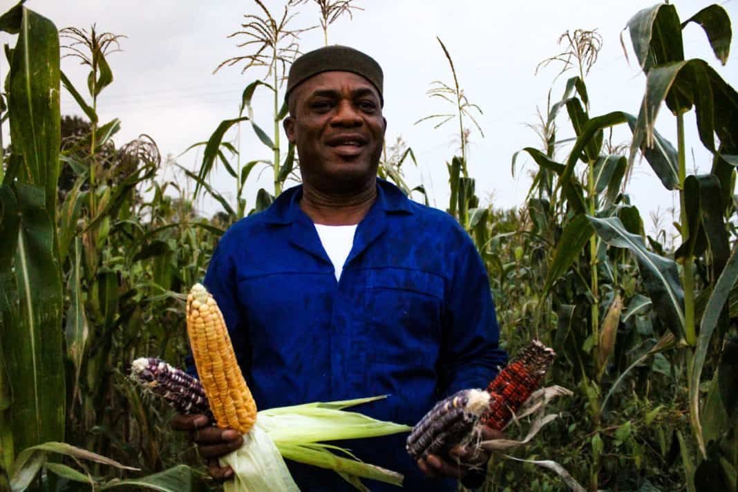 Edward Wisdom originally from the southeast of Nigeria has carved out a niche for himself by producing and selling produce that other African immigrants and expats struggle to find in South Africa.