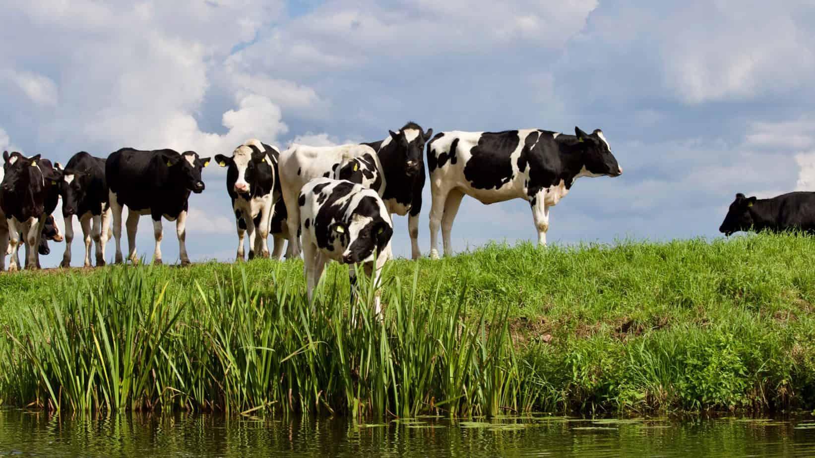 The Milk Producers Organisations (MPO), Chief Economist Bertus van Heerden believes the future of dairy farming in Mzansi is not bleak.