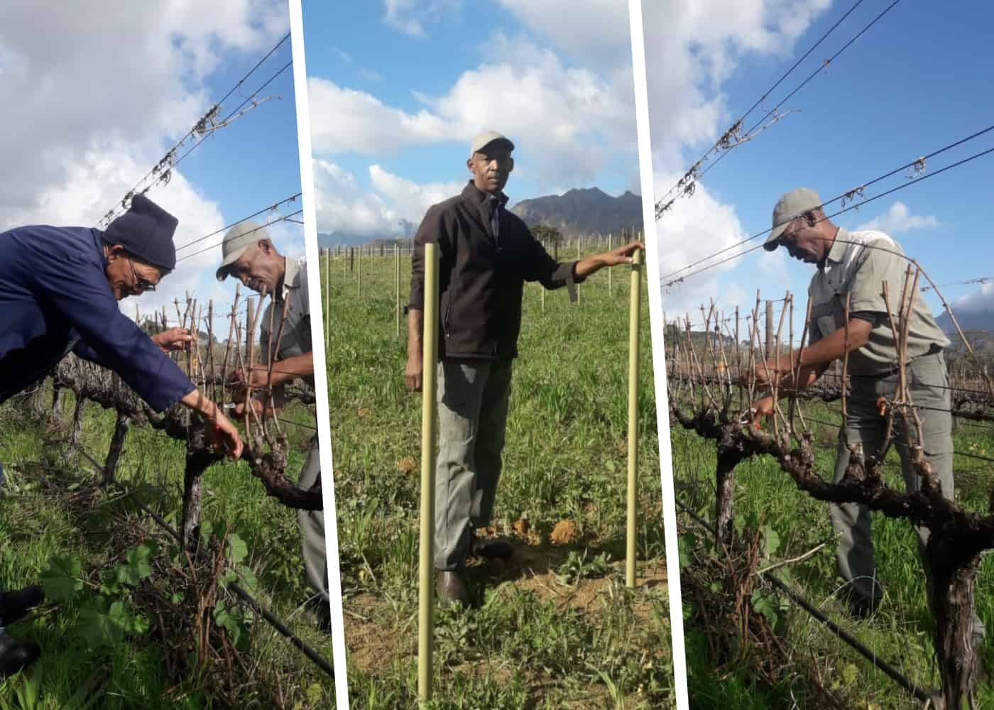 Christie Davids is an award winning agriworker who was born and raised on Packwood Farm in Franschhoek, where his parents worked and lived.