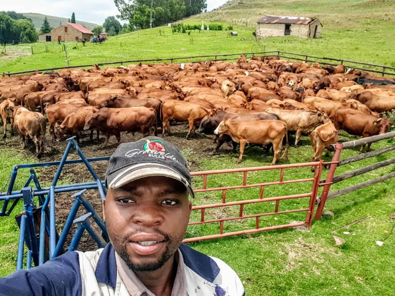 Nsika Shabalala manages the cattle farming department at Afrikan Farms in Mpumalanga.