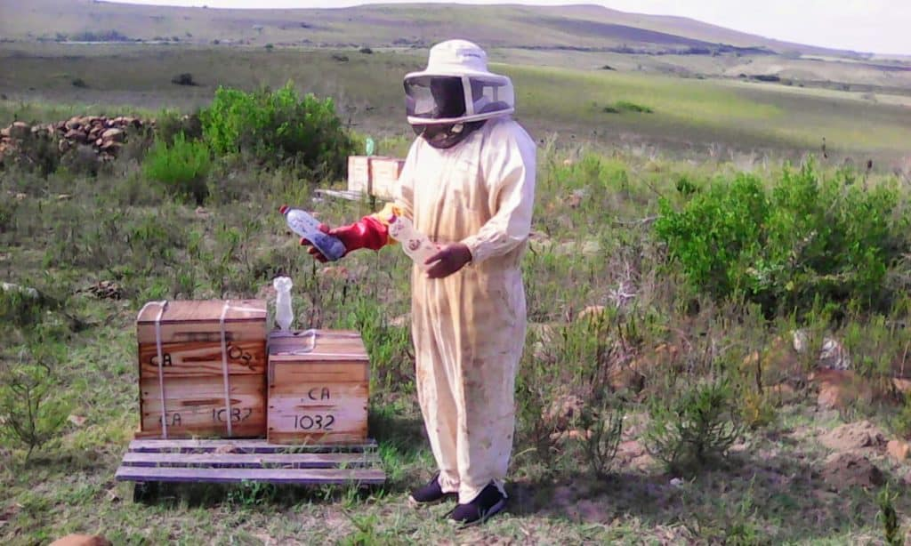 Piet Erasmus and his wife Christien Erasmus farms with bees on a one-hectare piece of land in the Southern Cape near Mossel Bay.