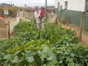 Magda Leonard, from Riverlands in the Western Cape, says she has been growing her own food for the past 2 years.