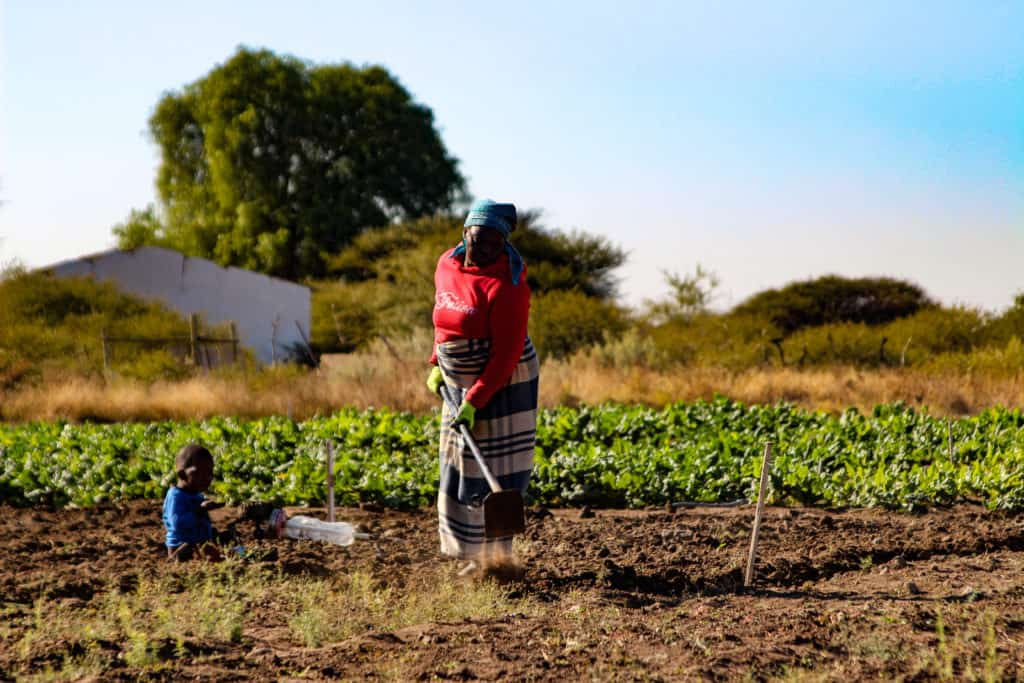 Zanele Ntuli and Aaron Motau have employed seven staff, this is an achievement to them as they want to support more family members and secure food security in their community.