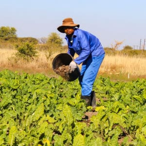 Sicelimpilo Ntombela, (25), from kwaNongoma in KwaZulu Natal, is an agricultural student from Mthashana TVET College and currently an intern at Eat Them Green farm.