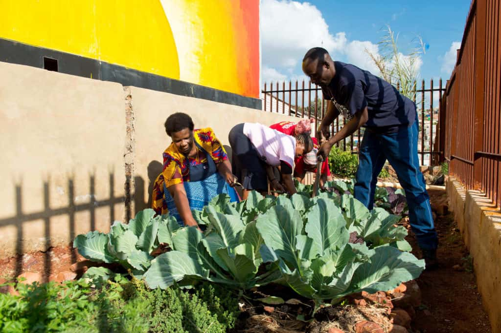 The Thoughtful Path has established over 200 vegetable gardens all over Munsieville.