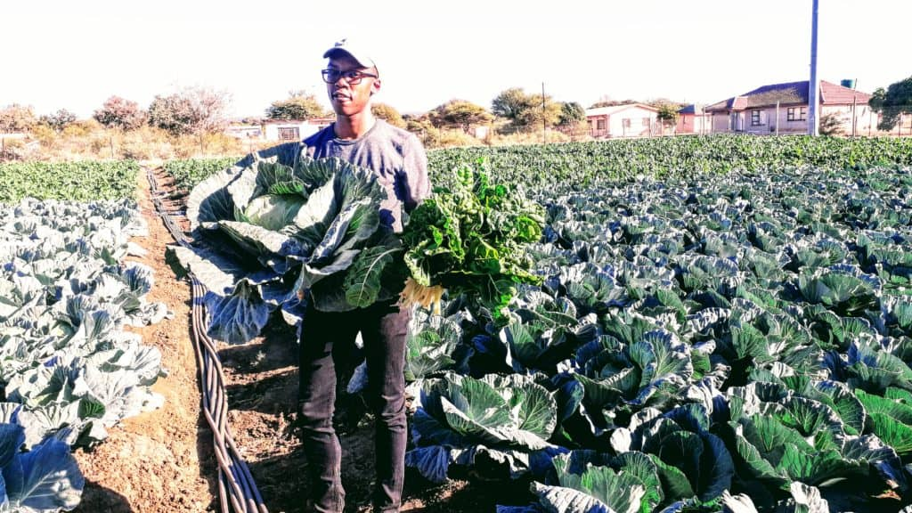 Lekabe on his farm called the Motswere Farming Project, situated in the North West.
