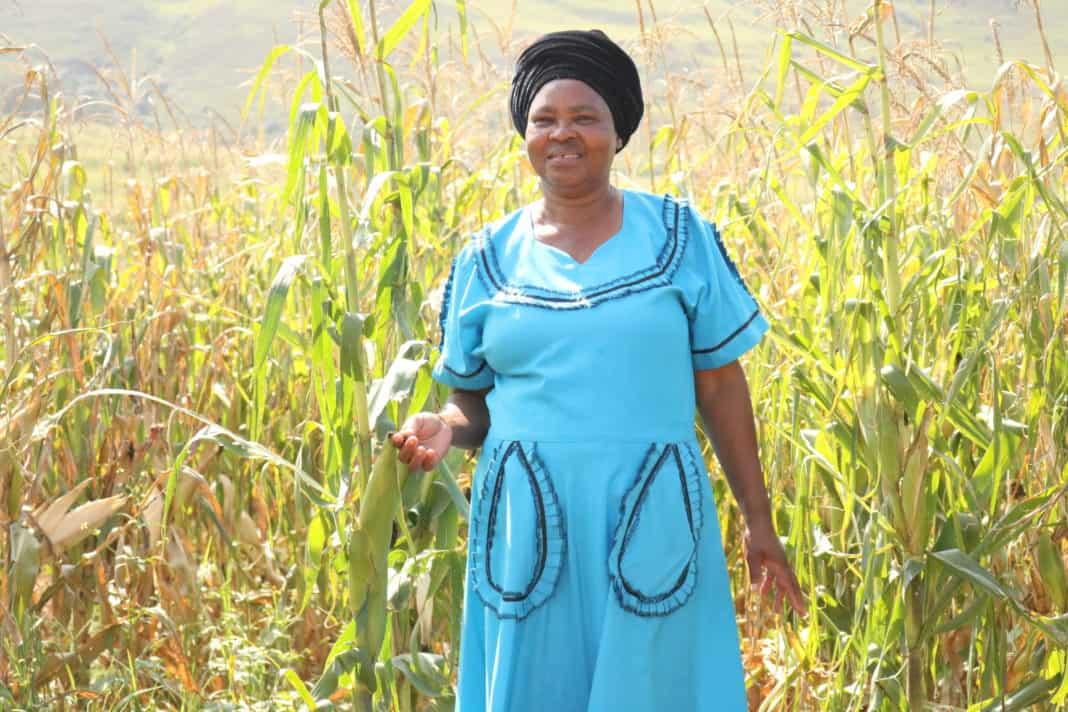 Nokuthula Khoza, is a small scale farmer from Bergville in KwaZulu-Natal.