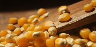 Popcorn farmer Hannes Bruwer says Mzansi's alomst orange colored popcorn is world famous and very sought after.