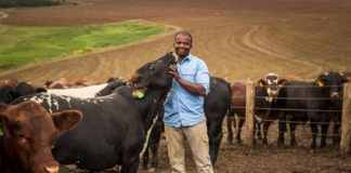 Ndumiso Gule is the assistant farm manager and beef section manager of Baynesfield Estate in KwaZulu Natal.