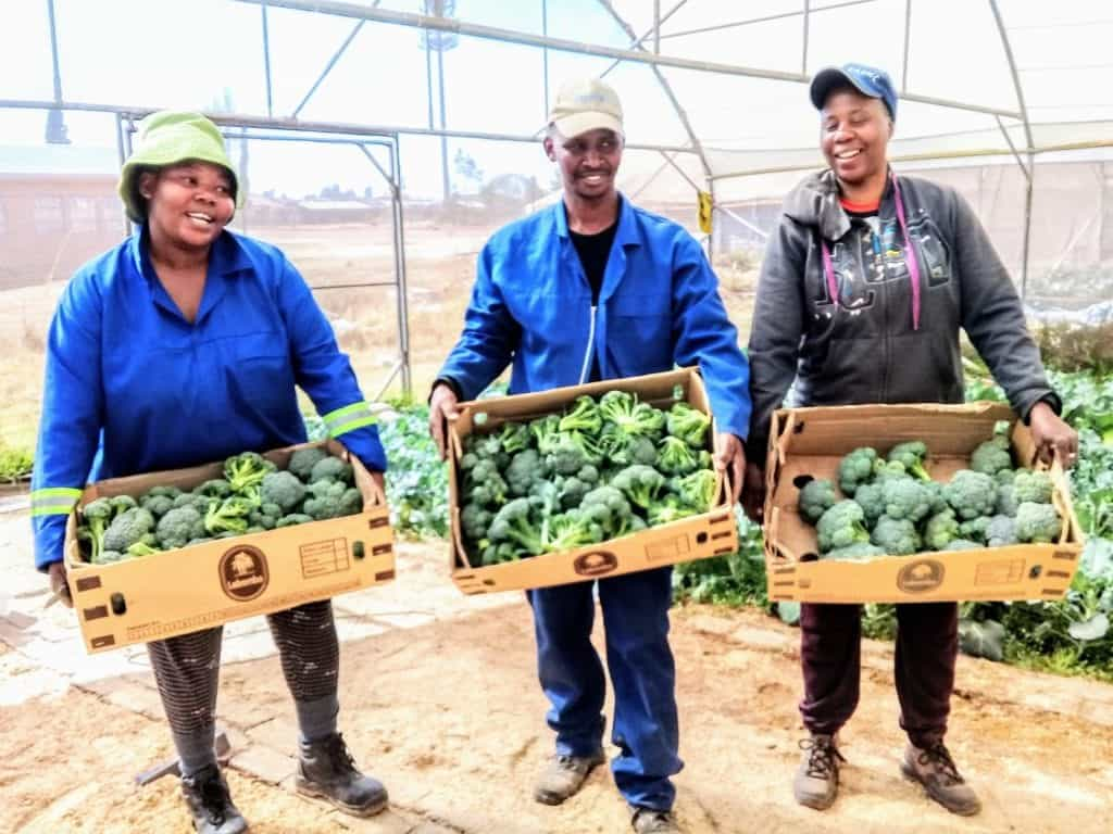 Nomgqibelo Mkhize, Vusi Makho and Lungile Maseko partnered in 2015 to start a vegetable garden to sustain themselves and their families.