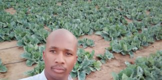 34-year-old Raymond Monyela's small veggie patch in his garden has boomed into a 6-hectare enterprise supplying major supermarkets in Polokwane.