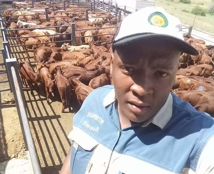 Mtambo Boerdery boasts hundreds of livestock he distributes in the Free State and Gauteng's Vaal Triangle