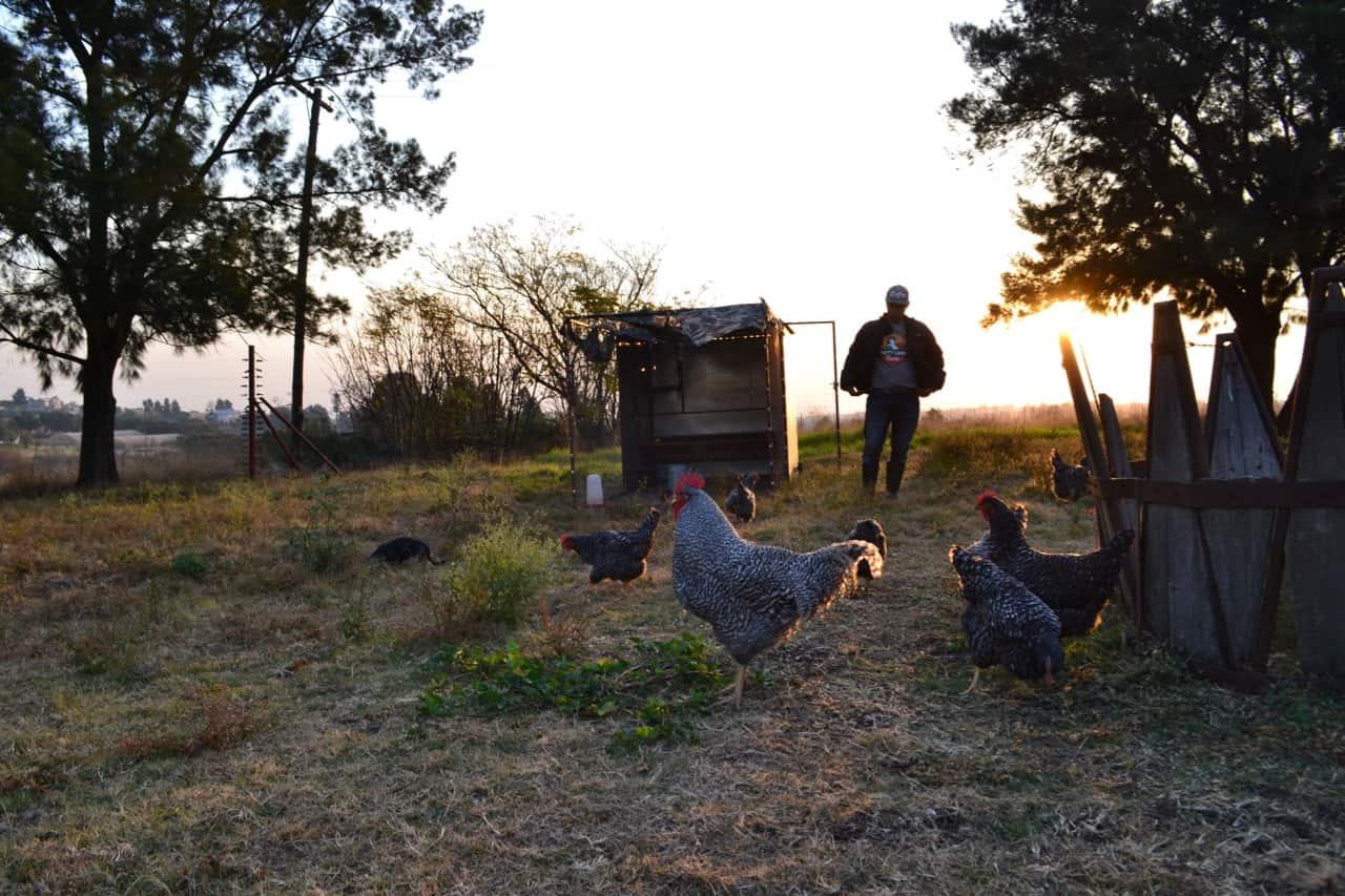 32-year-oldPatson farms with free-range chicken farm in Kyalami, Gauteng.