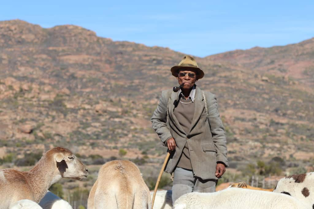 Oom Koos Paulse, experienced herder, with some of the livestock at the winter stock post at Jaarskloof in the Leliefontein Communal Area. Photo: Clement Cupido.