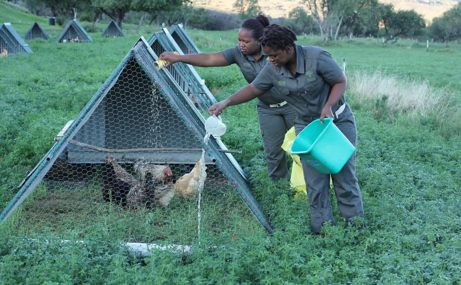 Nomahlubi Simoyisi (left) and Nwabisa Mkhandlwana, both from the Matatiele district, feed and water the chickens before first light.