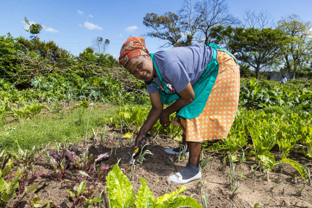 N.Mangxola is one of the women from Mzamomhle township who are growing food for their families through CATCH Projects.