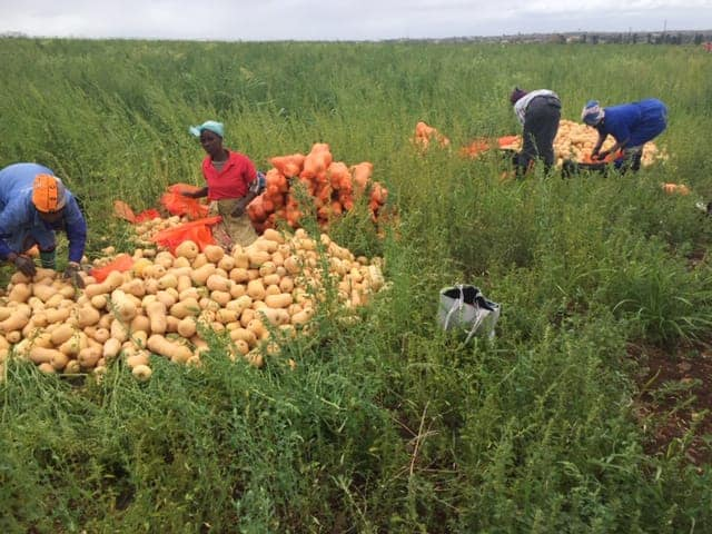 Under Sithole's reign, the Richtershoek farm had attained AgriSETA accreditation to give guidance to up and coming farmers.