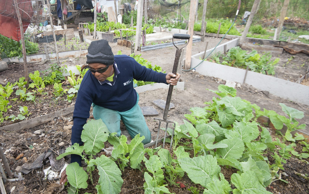 Vuyo Tsika (72) hasn't had much luck in registering his garden as a community project and feels like his constantly knocking on the wrong doors.