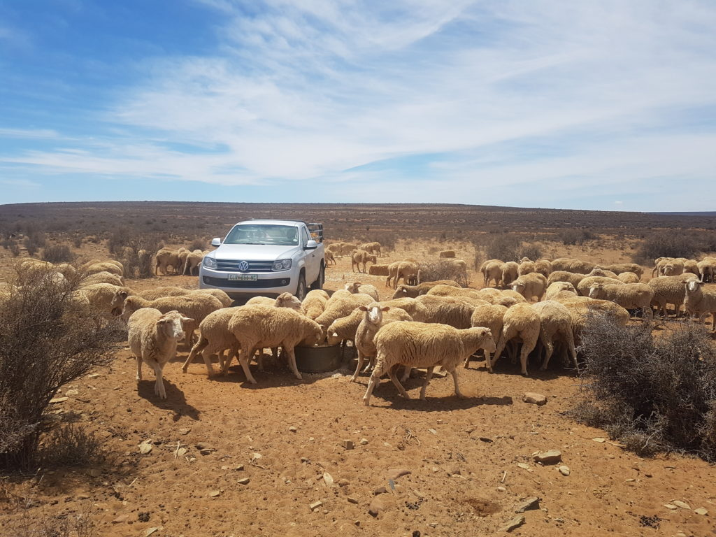 Despite the severe, ongoing drought in the Karoo Demetrius and Juan remain extremely proud of what they have achieved. Picture: Willem van der Berg/Landbouweekblad