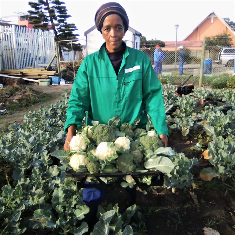 In 2014, Nomonde Kweza was crowned the best subsistence farmer in the Western Cape.