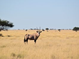 The wildlife industry is hoping that hunting will be allowed in level three of the nation-wide lockdown. Picture: Pexels/Stephan Streuders