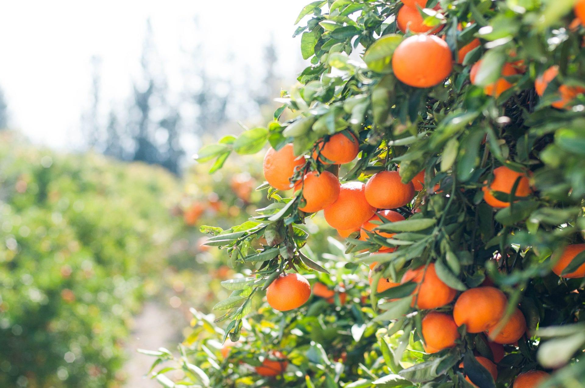 fruit farming