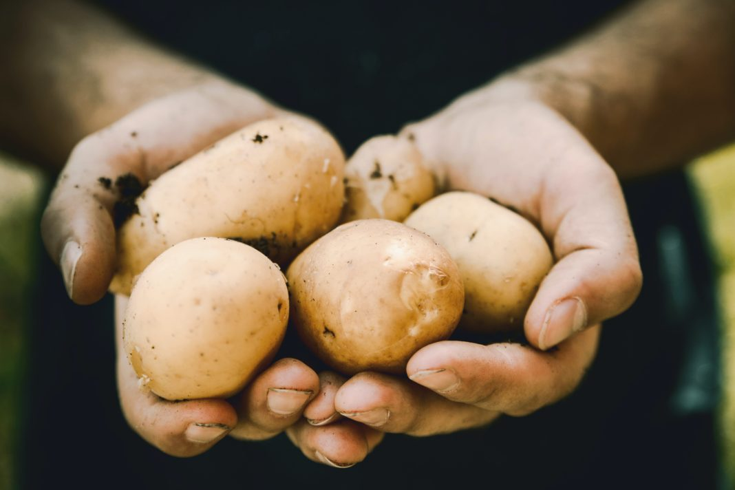 A possible surge of sheap imports of potato products to SA will severely disrupt the local industry industry leaders warn. Photo: Unsplash