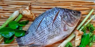 Cheap tilapia imports from China have taken a toll on local fish farmers who are all operating on a small scale here in Mzansi. Photo: Pixabay.