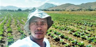 Bongani Zulu is a daredevil entrepreneur who learned a very valuable lesson when he planted 30 000 heads of cabbages with no real market in place. Photo: Supplied.