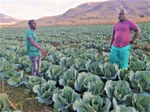 From left Zweli Hedzane and Wonder Maseko who work on his farm in Elukwatini. Photo: Supplied.