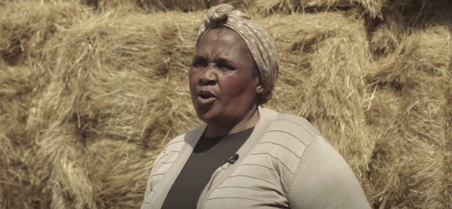 Among the Eastern Cape farmers whose sheep are destined for the Middle East is Nonthunzi Boyce from the Alfred Nzo district.  Photo: Al Mawashi YouTube